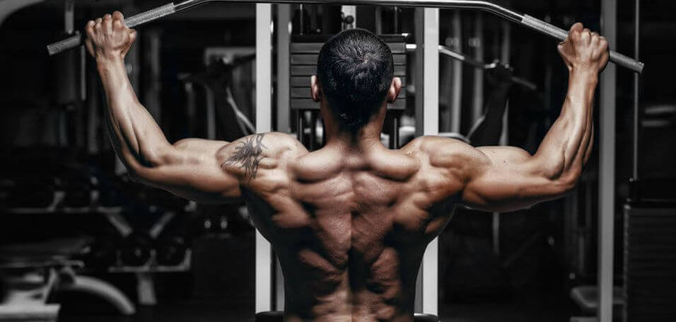 The Simple Science Of Effective Back Training
