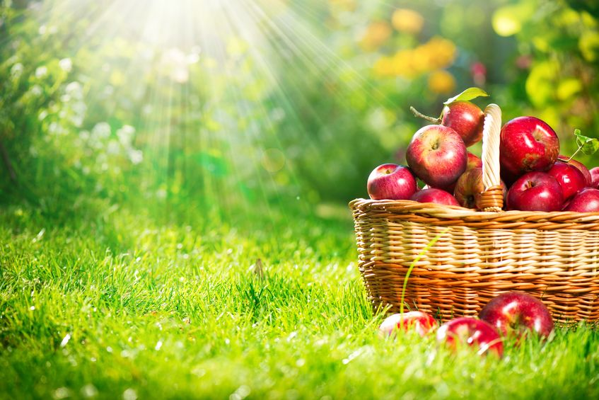 The Real Benefits and Disadvantages of Organic Food