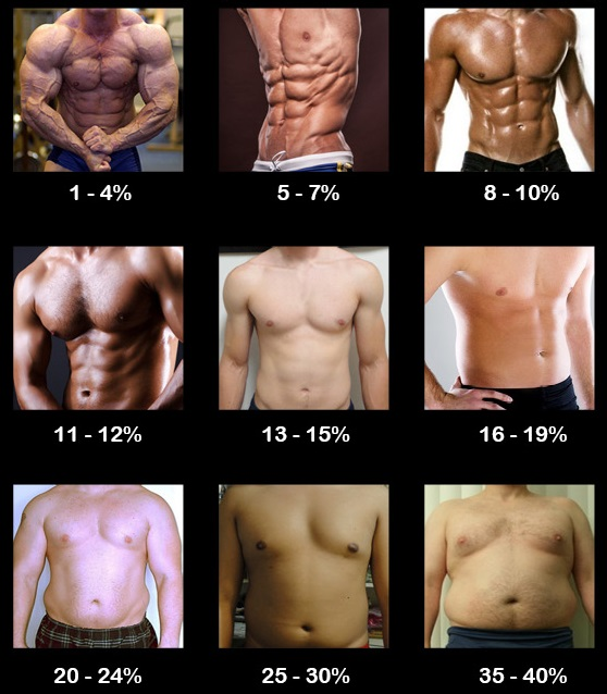 body composition chart