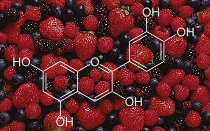 anthocyanins supplement