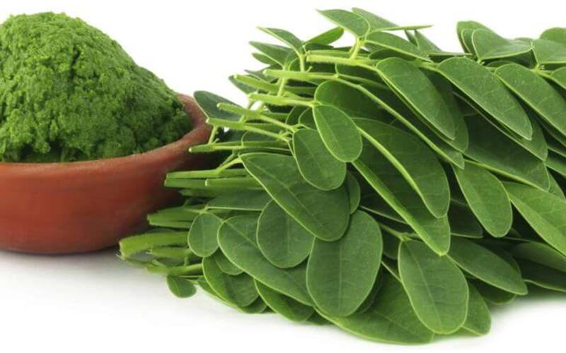 greens supplement Moringa Oleifera