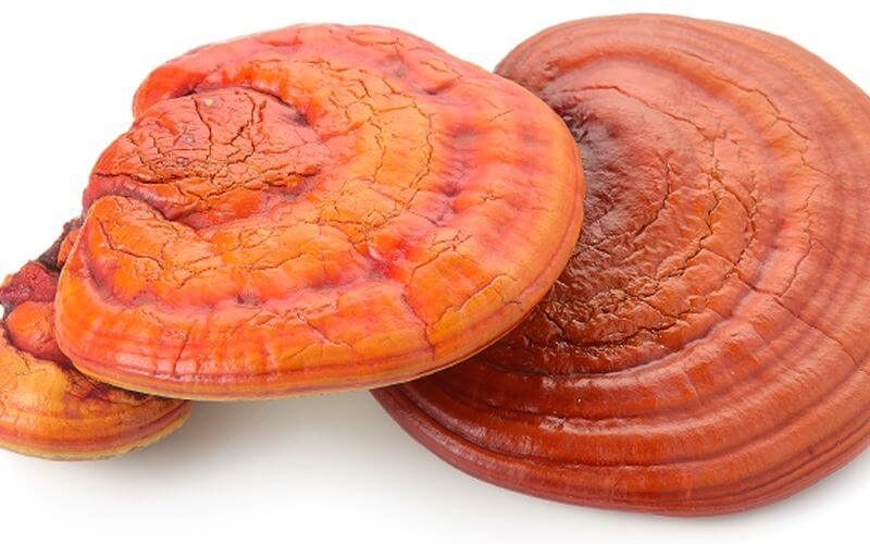 greens supplement Reishi Mushroom