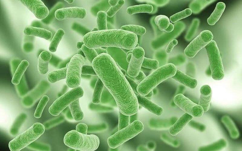 greens supplements Prebiotics