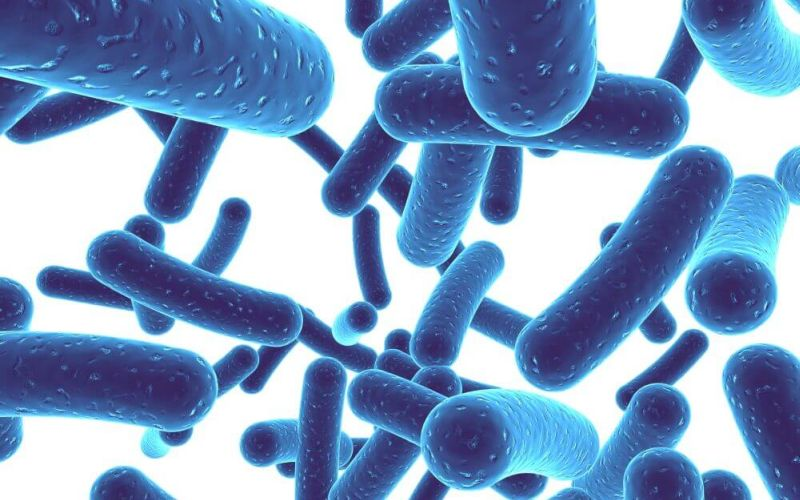greens supplements Probiotics
