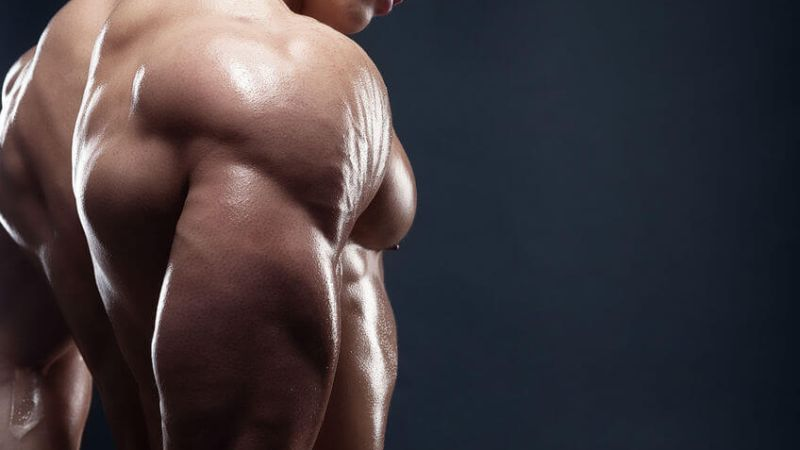 diet plan for building muscle