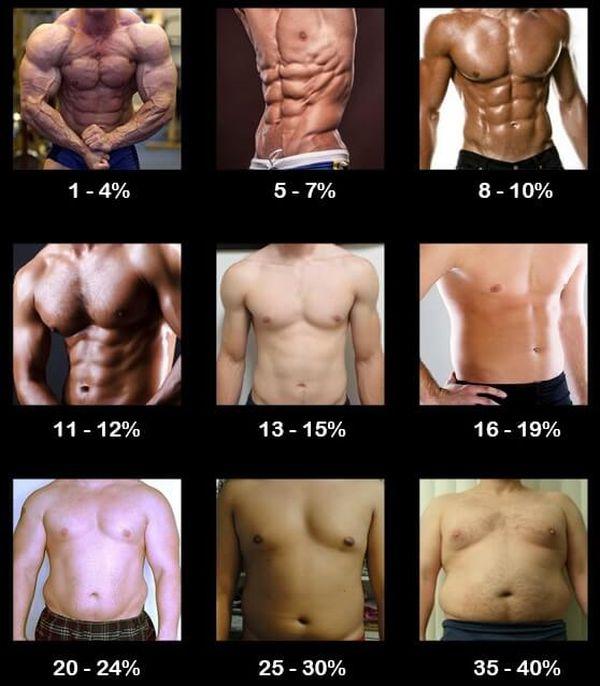 body fat chart men