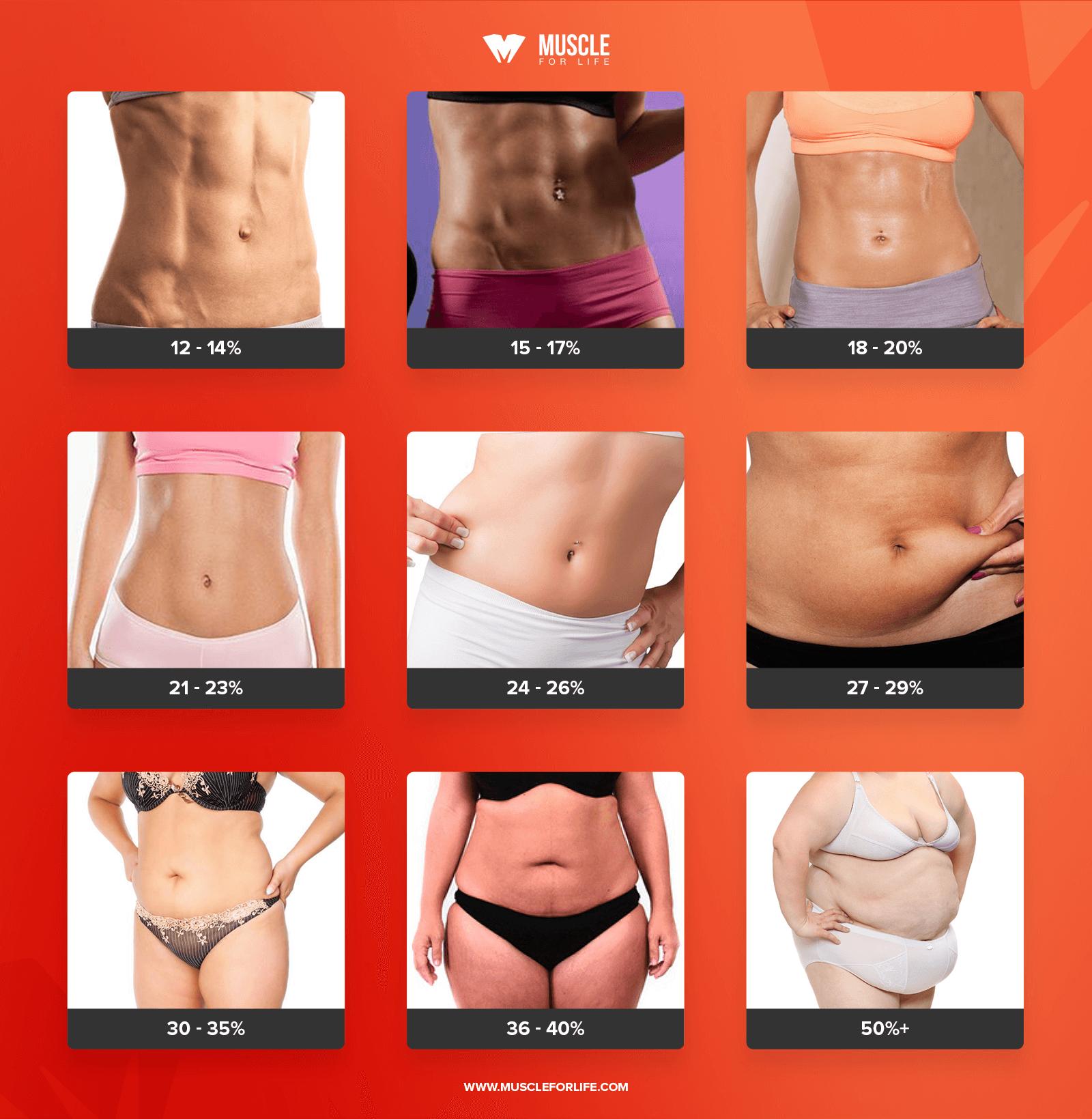 body composition chart women