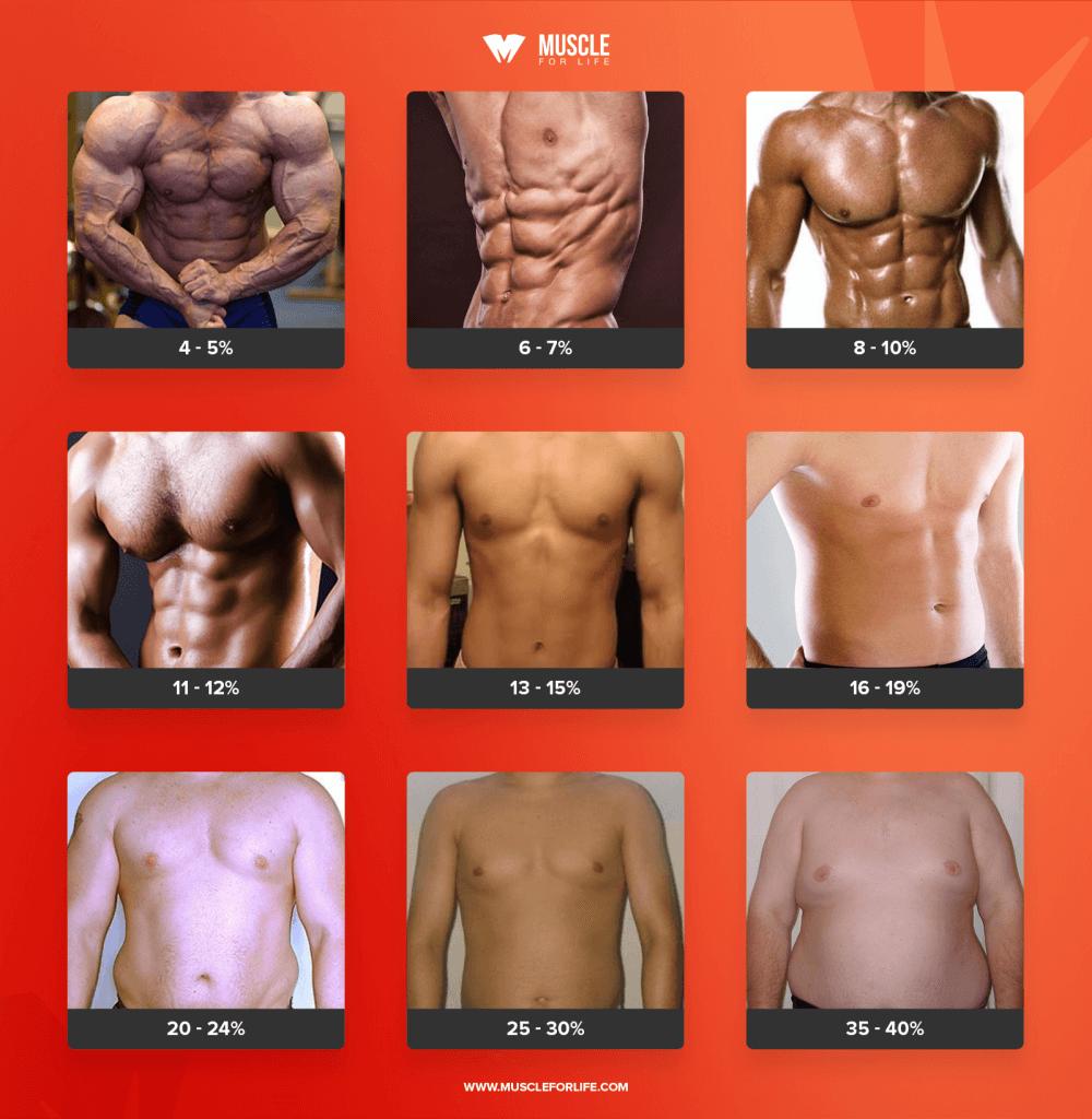 body composition chart men