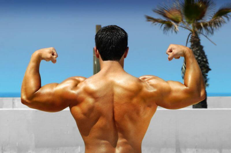 bigger stonger back anatomy