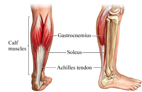 get bigger calf muscles