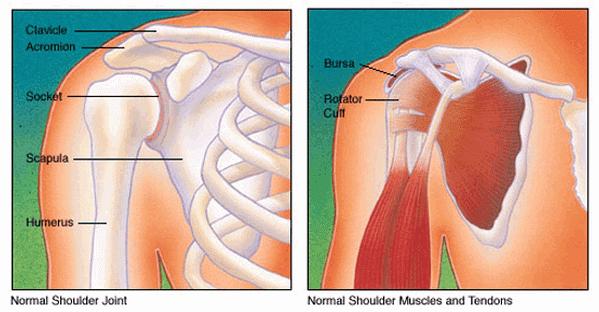 bigger stronger shoulders rotator cuff