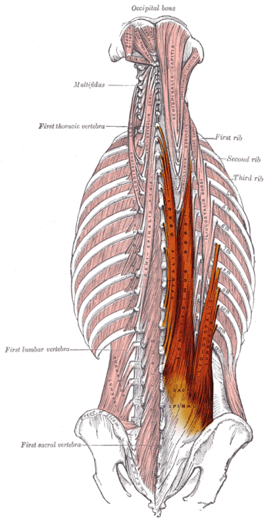 upper body workout back muscles anatomy