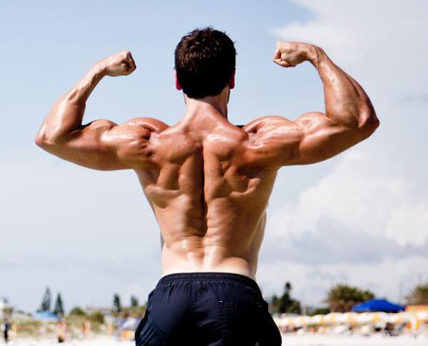 upper body workout biceps