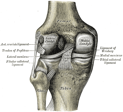 knee pain meniscus