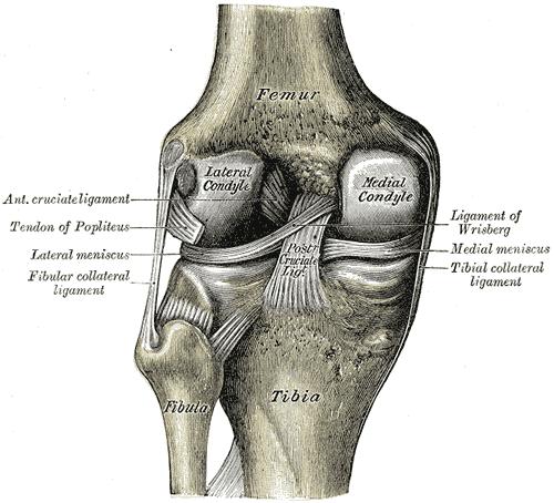 knee pain meniscus
