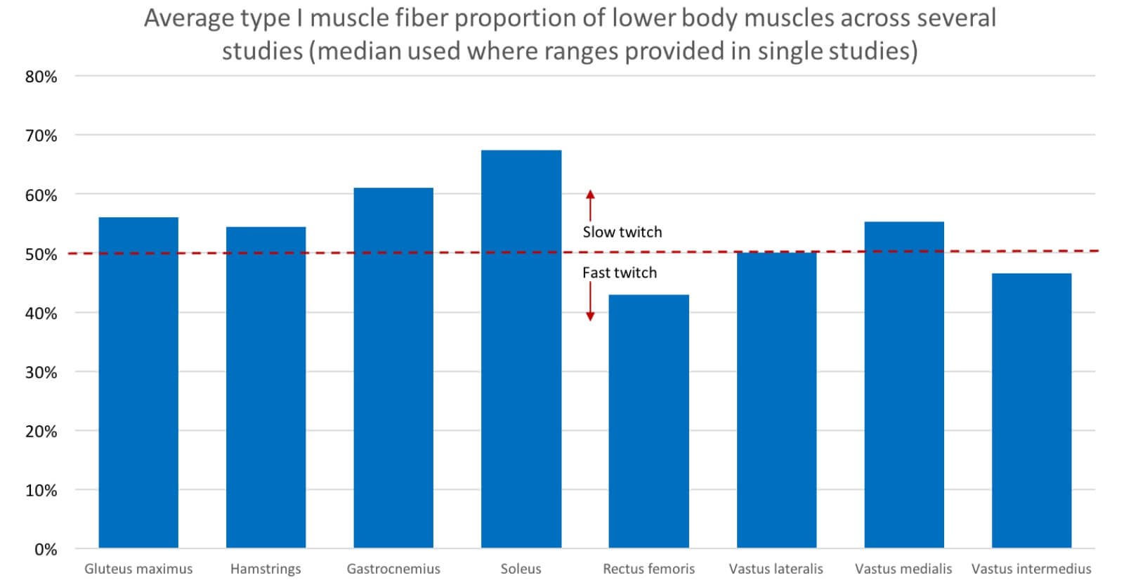 muscle fiber types lower body