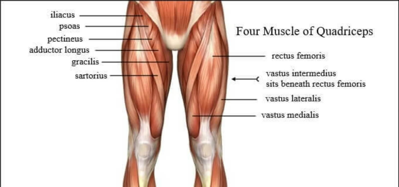 bulgarian split squat quads
