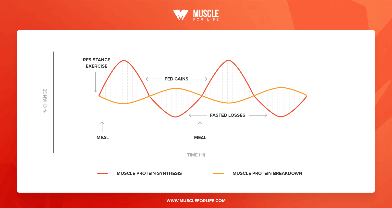 strength training and muscle protein synthesis