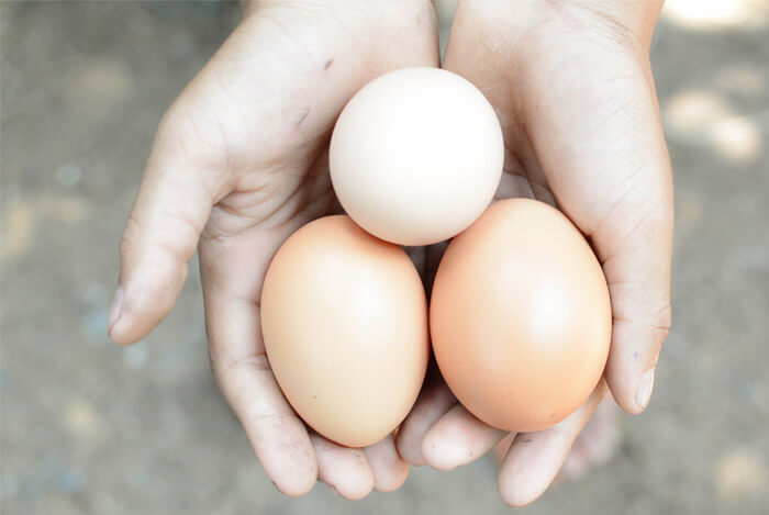 hands holding eggs