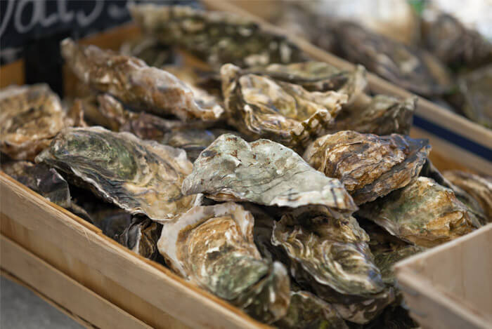 shelled oysters
