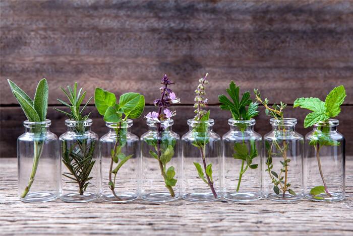 herbs spice
