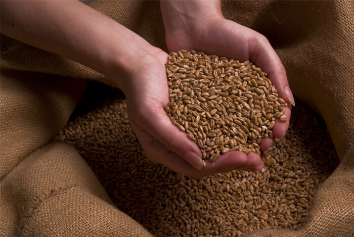 hands on grains