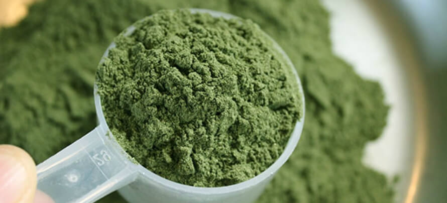 best greens supplment powder