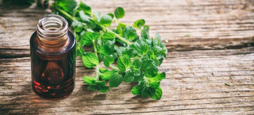gut health supplements oregano