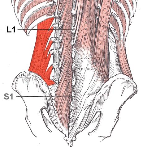 Quadratuslumborum