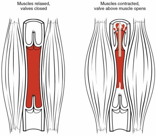 muscle-pump-2