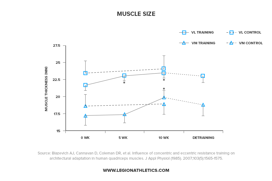 Muscle-Size-After-30-Weeks-of-Not-Training