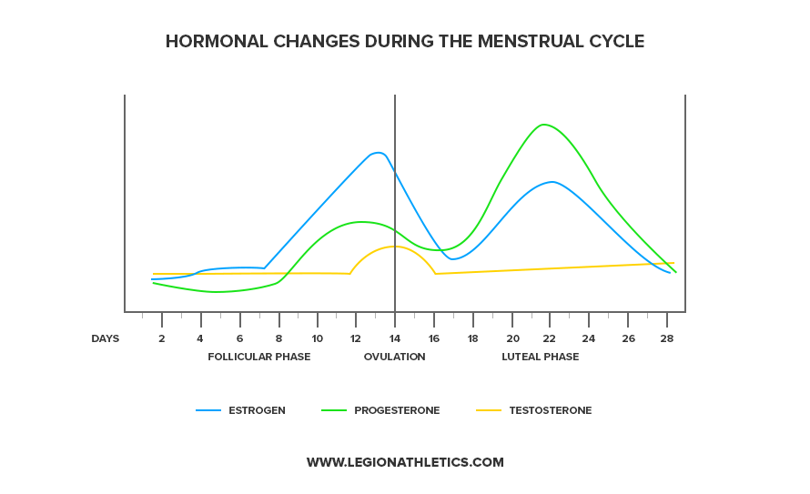 Hormonal-Changes-During-the-Menstrual-Cycle