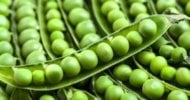 This Is Everything You Need to Know About Pea Protein