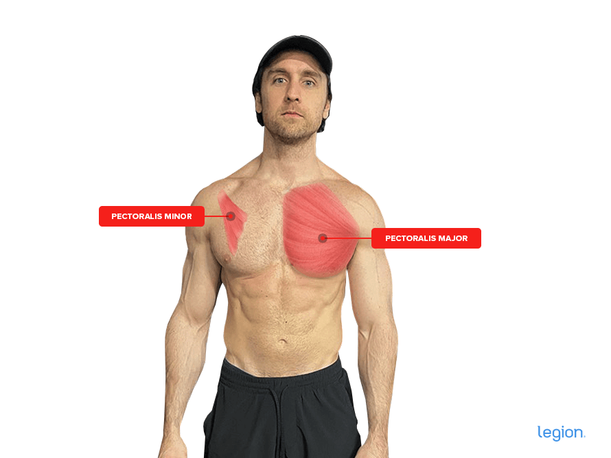 Pectoralis-Major-and-Minor_(2)
