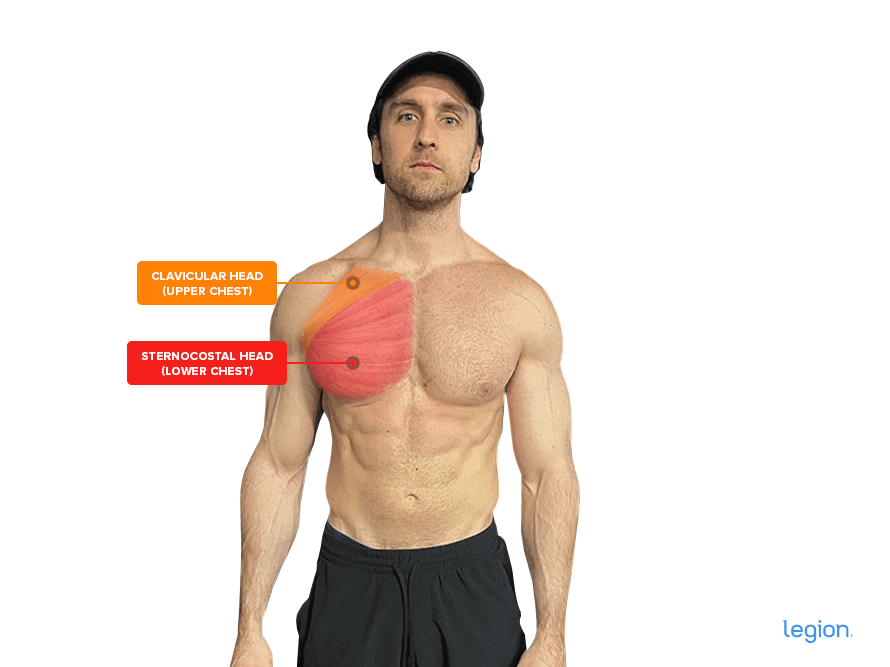 The-Upper-and-Lower-Chest-Muscle-Heads_1