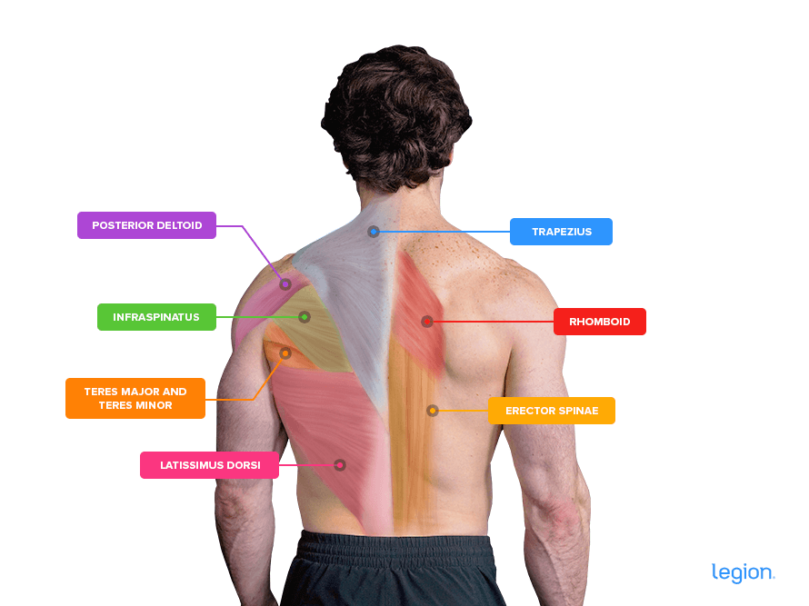 Back-Muscles-v2