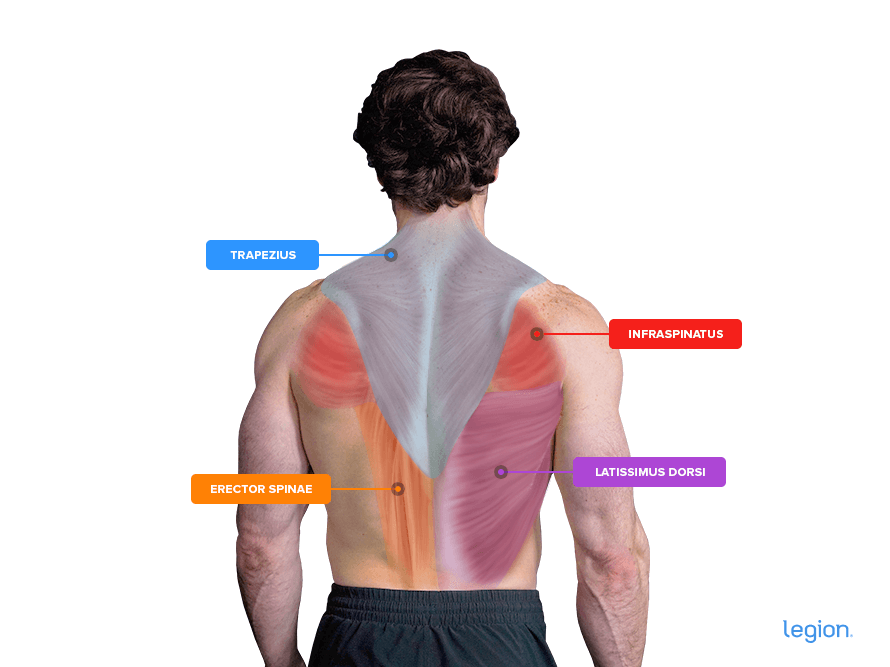 Stretch the back muscles