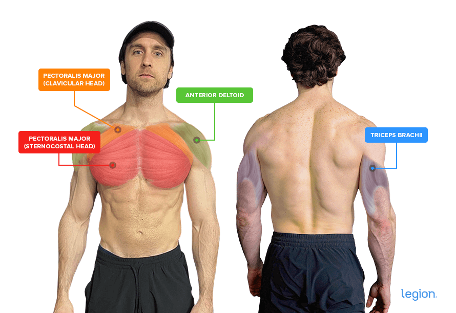 Muscles-Image