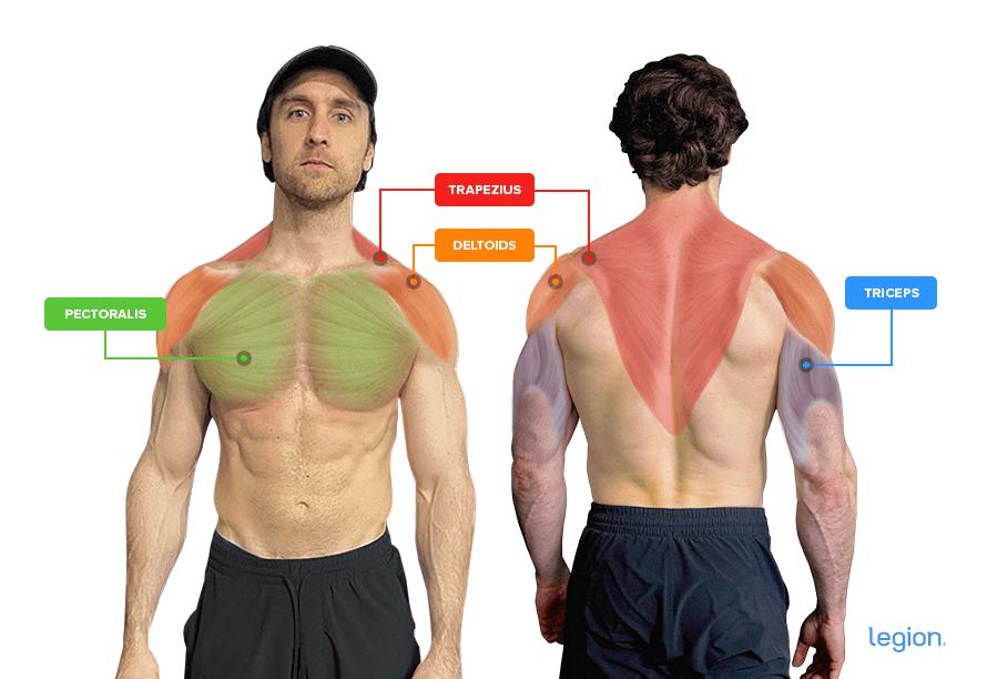 Shoulder Press Muscles (Anatomy)